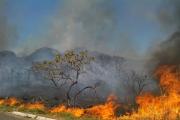 050116 queimas