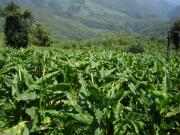 200911_cultivos